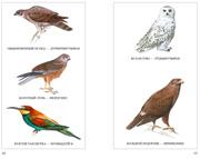 Птицы - Тылобурдоос - Разворот