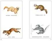 Животные - Пöйшуръёс - Разворот